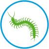 picto-scolopendre