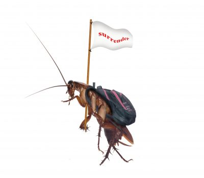 Cockroaches carry the flag, surrender, walk out of the house.In the house is a system of insect protection.bug isolated on white background