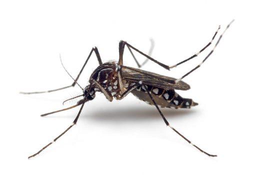 services moustique control